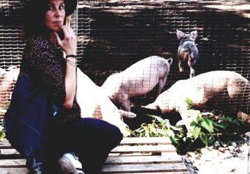 Jet bij varkens in Boxtel